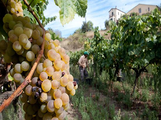 Wine tour of Alella