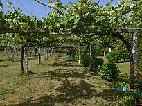 Albariño Vineyards