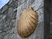 Scallop shell Camino - Galiwonders