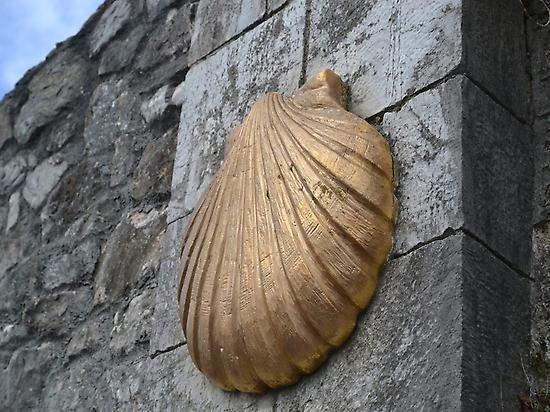 Scallop shell Camino - Galiwonders