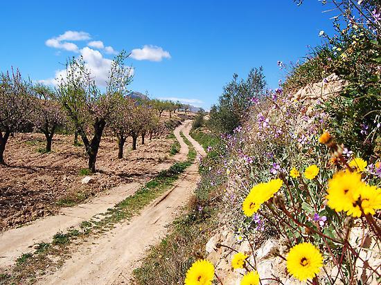 De camino hacia Vélez Blanco