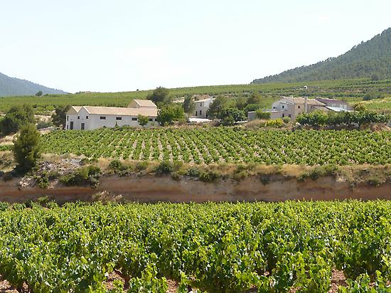 Wine lanscape of Bullas