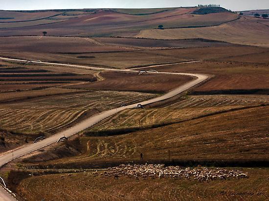 Estampa rural de camino a Caravaca