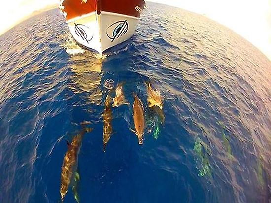 Viendo delfines