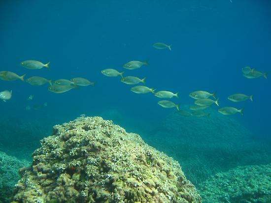 ¿Quieres ver peces en su medio natural?