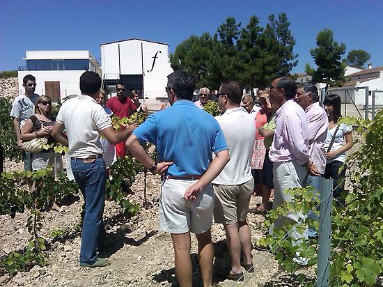 Los frailes Ecological vineyard