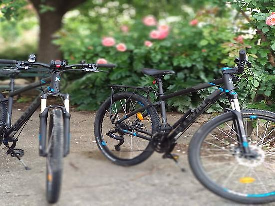 Room + renting bikes