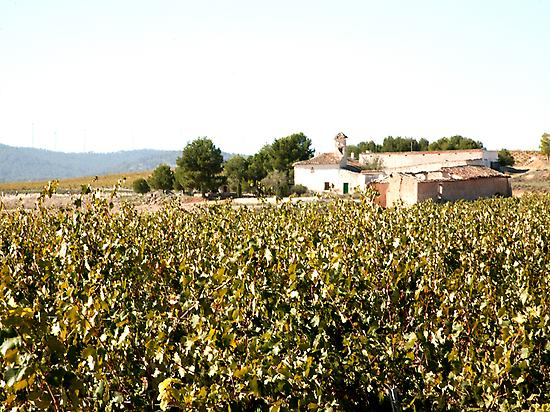 Dominio Espinal vineyard