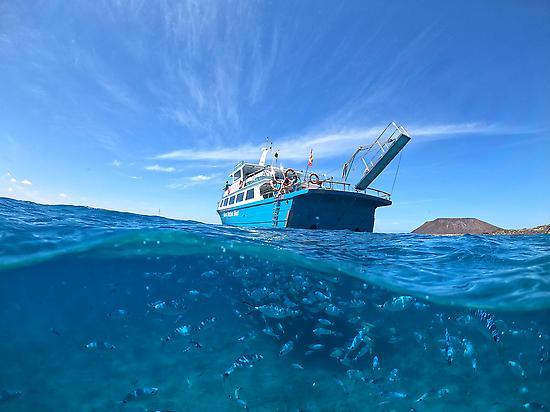 fish under the Majorero boat