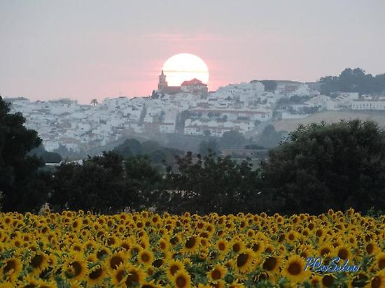 Sunset from the Sunflowers