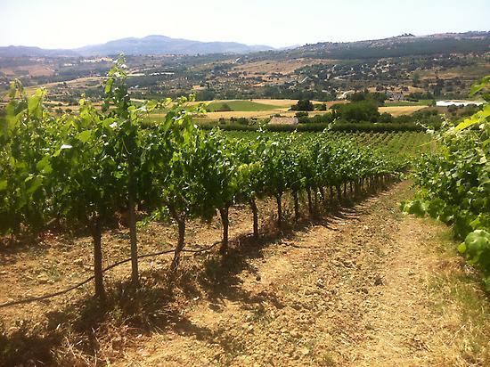 Ronda winery tour