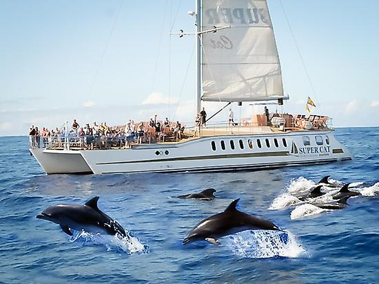 Sihtght Whales and Dolphins in Catamaran