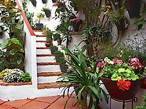 Visita Guiada Patios de Córdoba