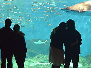 Aquarium of Seville 0