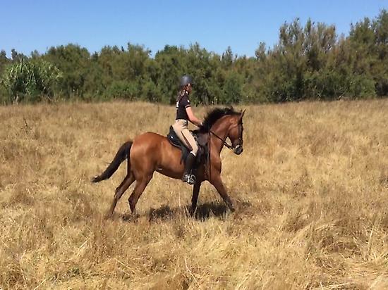 Horseriding in Doñana (Huelva)