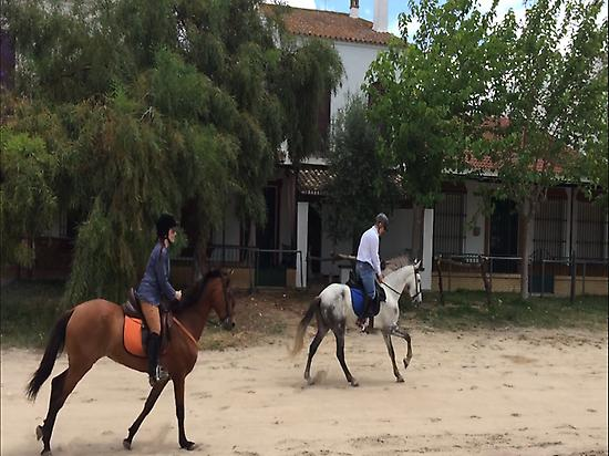 Galloping on horses in El Rocio (Huelva)