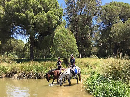 Horse riding in Doñana (Andalusia)