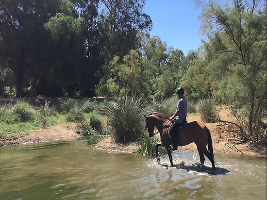 Horsebackriding in Doñana (Andalusia)