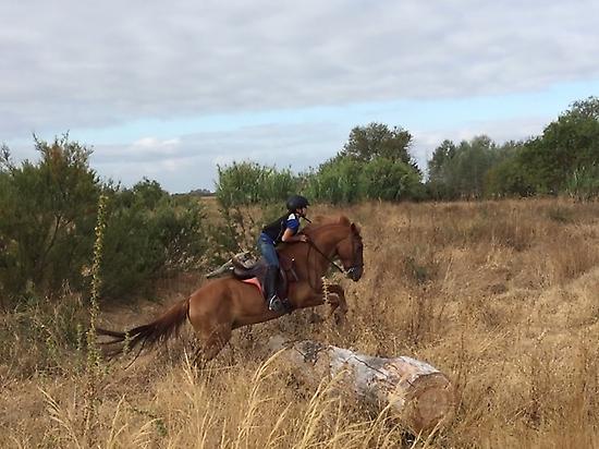 Horseback riding in Doñana (Andalusia)