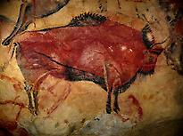 Bison - Altamira wall painting