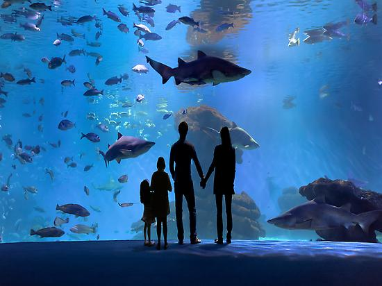 Visit to Palma Aquarium, Mallorca