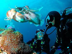 Discover scuba diving in Tenerife