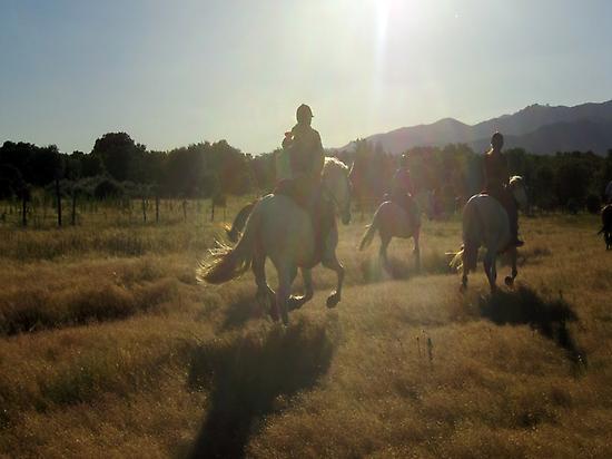 Cantering along the Cañadas Reales