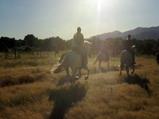 Cantering along the Cañadas Reales