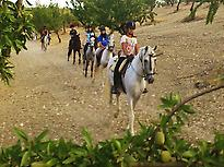 Horse ride in Las Gabias