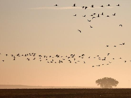 Birdwatching in wetlands of Extremadura