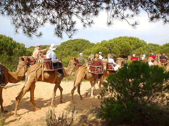 A camel ride in Doñana