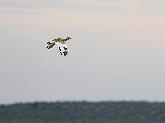 Birding en Los Llanos