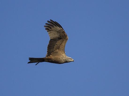 Birdwatching en los Llanos, Extremadura