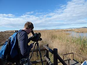 Birdwatching in Marjal dels Moros