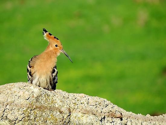 Birding en Los Llanos, Extremadura