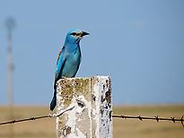 Birdwatching in Extremadura