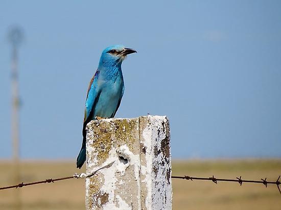 Observación de aves en Extremadura