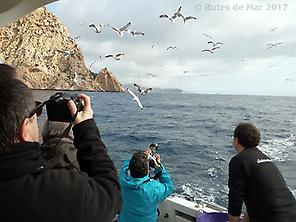 Marine fauna Photography in Alicante