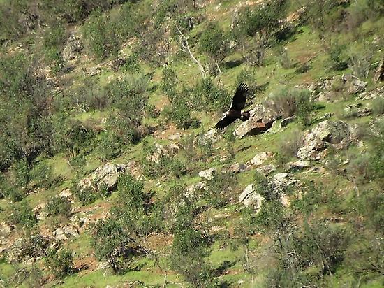 Birding route Sierra de San Pedro