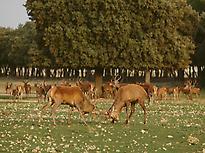 Reserva Natural.