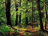 Our Ancestor´s Forest