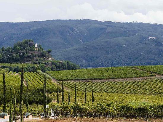 Vineyards of Penedès