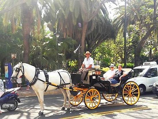 El mejor coche de caballos de Malaga