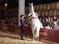 Cadiz, Jerez  from Malaga